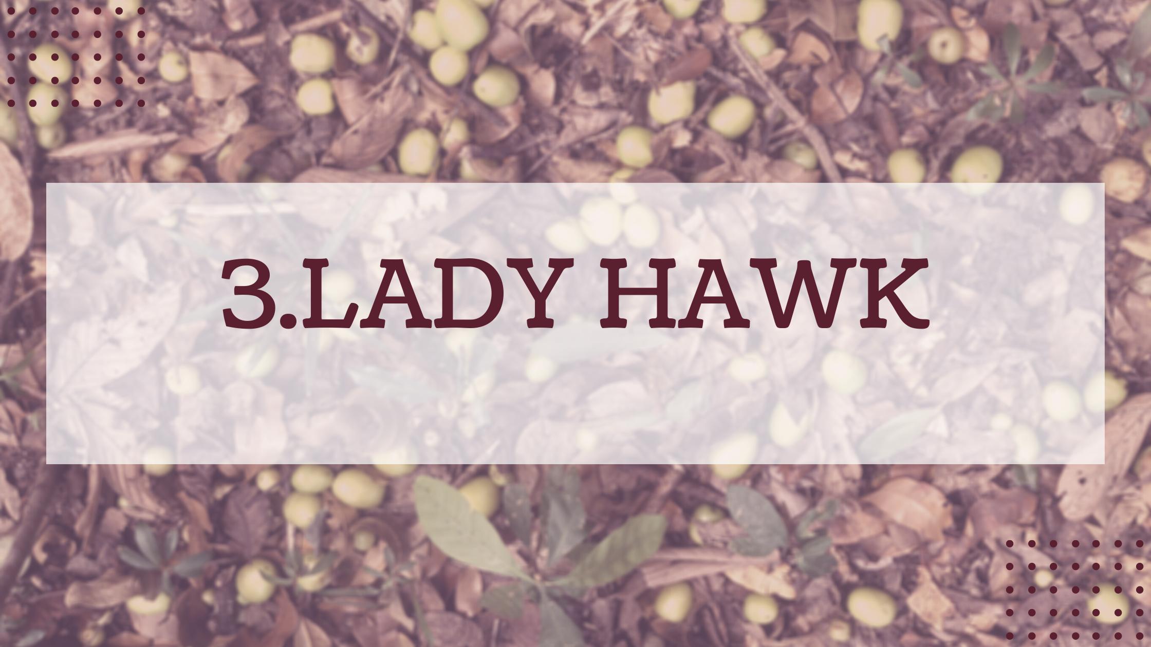 3.Lady Hawk